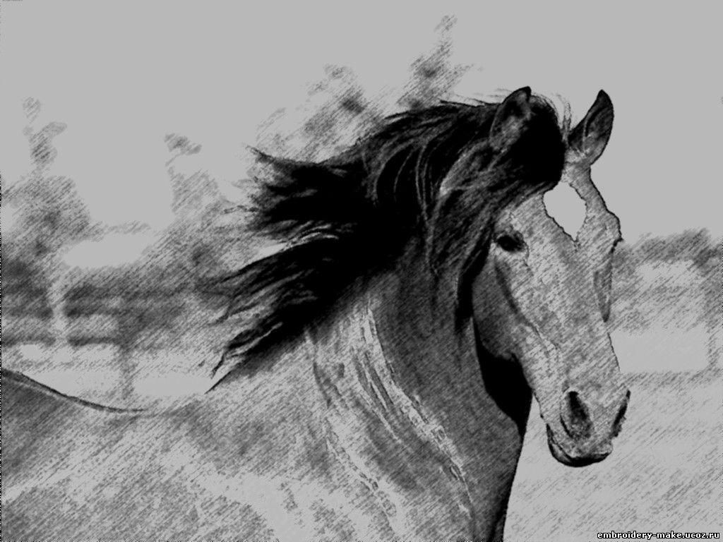 Лошадь,рисунок карандашом.: embroidery-make.ucoz.ru/load/risunok_karandashom_loshad/1-1-0-3